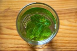 herb_mint