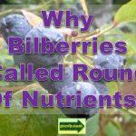 bilberries_nutrients